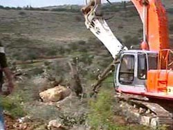 Destruction of Tress by the Israeli Military and Settlers